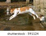 Stock photo flying cat 591124