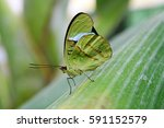 A Green Tropical Butterfly On ...