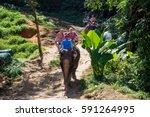thailand  phuket   19 february... | Shutterstock . vector #591264995
