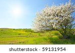 apple trees blossom under blue... | Shutterstock . vector #59131954