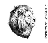 lion proud  face in profile ... | Shutterstock .eps vector #591330119