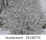 Snow Covering Branches