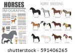 Horse Breeding  Infographic...