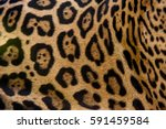 Jaguar  Panthera Onca  Fur ...