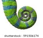 chameleon tail in spiral ... | Shutterstock . vector #591506174