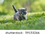 Stock photo kitten in the green grass 59153266