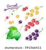 watercolor illustration of... | Shutterstock . vector #591566411