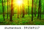 forest with sunlight. the sun... | Shutterstock . vector #591569117