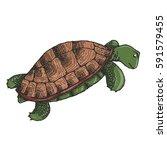 cute green turtle   Shutterstock .eps vector #591579455