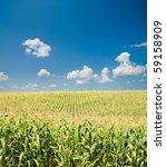 Field With Corn Under Blue Sky...