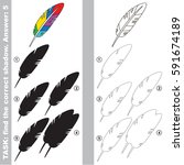 rainbow feather with different... | Shutterstock .eps vector #591674189