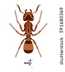 abstract ant illustration on... | Shutterstock .eps vector #591680369