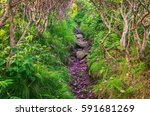hiking trail  rhododendron shed ... | Shutterstock . vector #591681269