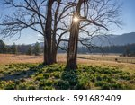 spring daffodils  great smoky... | Shutterstock . vector #591682409