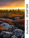autumn sunset  dolly sods... | Shutterstock . vector #591687389