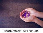 hands holding purple ribbons... | Shutterstock . vector #591704885