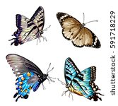 Illustration Of Butterfly  On...