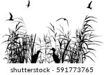 illustration with heron between ... | Shutterstock .eps vector #591773765