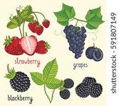 set of berries mix raster... | Shutterstock . vector #591807149