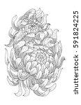 chrysanthemum. hand drawn... | Shutterstock .eps vector #591824225