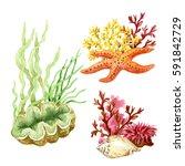 raster watercolor vivid sea... | Shutterstock . vector #591842729
