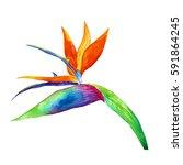 tropical flowers.watercolor... | Shutterstock . vector #591864245