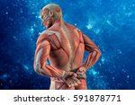 anatomical vision back pain. 3d ... | Shutterstock . vector #591878771