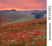 Dorset Poppy Field Sunset  Uk