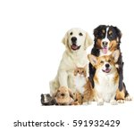 set pet on a white background
