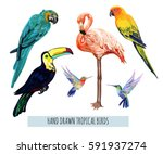 Stock vector vector hand drawn collection of beautiful exotic tropical birds isolated on white background 591937274