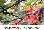 flower floral outdoor park at... | Shutterstock . vector #592060259