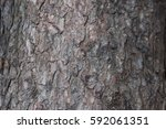 Small photo of Trunk bark Abies concolor on the sides blurred