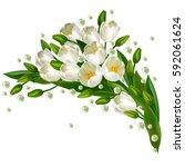 tulip flower isolated over... | Shutterstock .eps vector #592061624