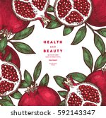 pomegranate fruit vintage... | Shutterstock .eps vector #592143347