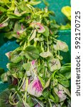 Small photo of En choy (Amaranthus tricolour) also known as Amaranth, Chinese spinach in the market