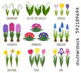 big vector collection of spring ... | Shutterstock .eps vector #592189694