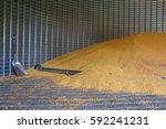 pile of corn inside a grain bin. | Shutterstock . vector #592241231