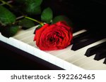 red rose on the top of grand...   Shutterstock . vector #592262465