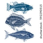 set of vector fishes  different ... | Shutterstock .eps vector #592290515