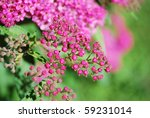 Little pink spring flowers on green background - stock photo