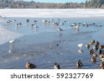 Wild Duck And Bird In Deer Lak...
