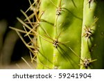Closeup Of A Cactus With Spike...