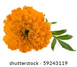 Marigold Flowers Isolated On...