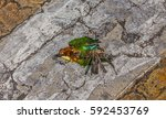 top view and close up photo of...   Shutterstock . vector #592453769