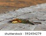 close up photo of bird carcass...   Shutterstock . vector #592454279
