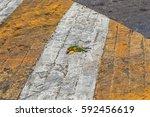 event simulation of bird...   Shutterstock . vector #592456619