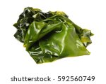 seaweed kelp   laminaria   wet... | Shutterstock . vector #592560749