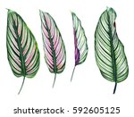 Set Of Four Tropical Leaves...