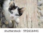 Stock photo kitten standing on the floor and stare 592616441