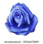 Blue Rose Flower  White...